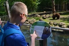 Jakub czyta informacje o niedzwiedziu brunatnym.