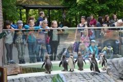 Siedem pingwinków oczekuje na rybki.