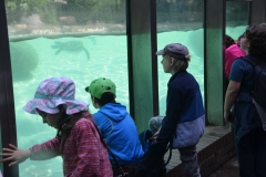Obserwowaliśmy podwodny świat der Pinguine.