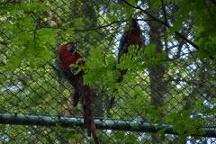 Te papugi opowiadały nam Hallo.