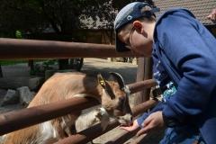 """Krzysiu zapraszał kozy, by podeszły """"Komm zu mir!"""""""