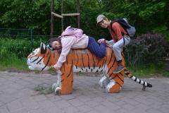Na Tiger, los! No tygrysie ruszaj!
